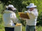 The Honey and Bee Connection Beekeeper